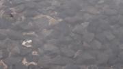 20120710amembo03s