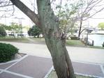 20090417sakura01