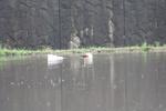 20090525aigamo01