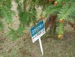 20100425koyozan02