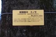 20110319enoki02