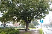 20110320kusunoki04