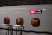 20110328sakura02