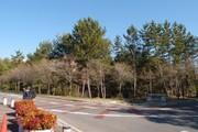 20110410sakura01