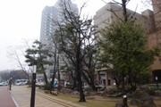 20110501kokutaiji01