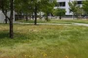 20110617kusa01