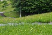 20110624azami