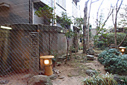 20130106kakashi01
