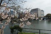 20130410sakura01