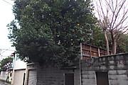 20140301natsumikan01