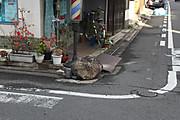 20141204ikezuishi01