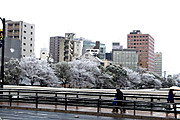 20150103yukisakura01