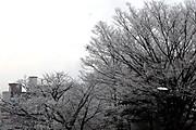 20150103yukisakura02