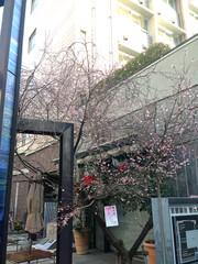 20160203sakura